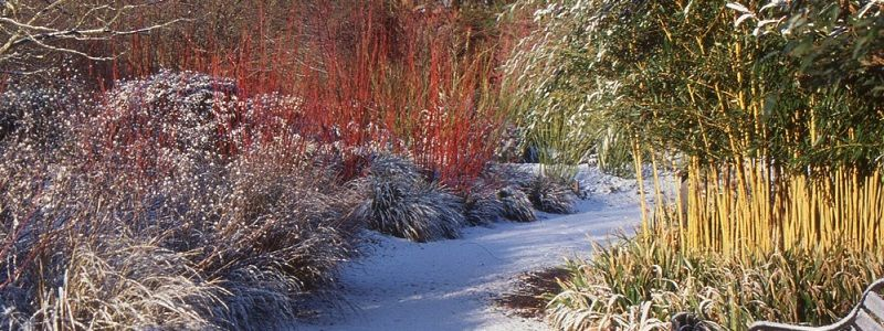 What To Do In The Garden In January Plantshopper