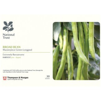 Broad Bean 'Masterpiece Green Longpod'